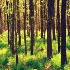 perka mišką